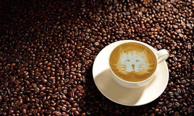 ネコカフェのバイトが人気の理由イメージ1